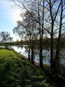 Rives de Saône au soleil de Mogneneins
