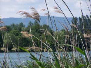 Flore du val de Saône - Mogneneins