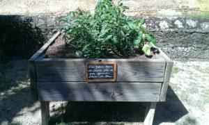 Profitez et protégez les jardins partagés !