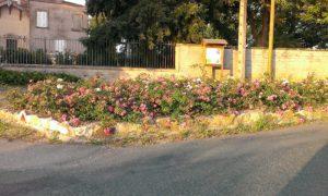 Fleurs et rosiers au hameau de Flurieux