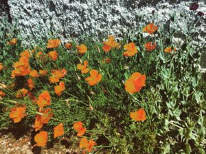 Flore et faune préservées à Mogneneins !